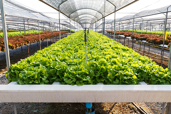 Cannablast-organic-pest-control-for-vegetable-herb-flowering-plants_outdoor-and-indoor-growing-operations.